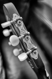Macro Guitar II