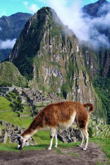Machu Picchu, Peru (2007)