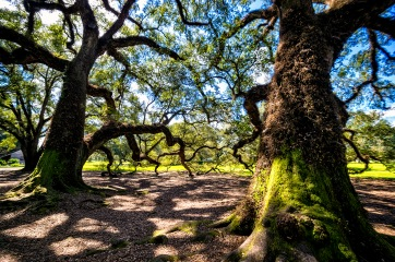 Oak Alley, Louisiana - Nature Category